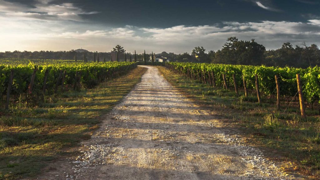 Napa back roads winery