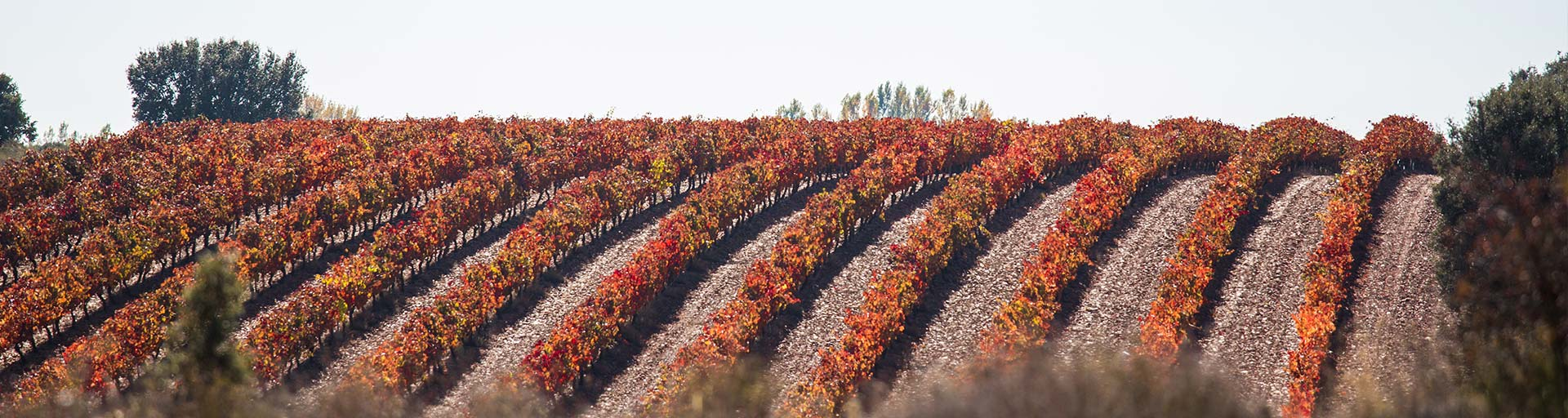 California-Wine-Tours-Northern-Sonoma-Tours-Page