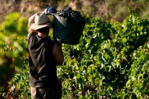 Napa Wine Tours, Napa Valley Tours